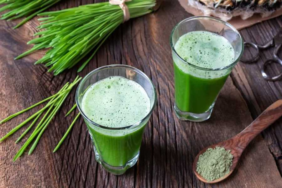 Barley Grass Powder vs Barley Grass Juice Powder