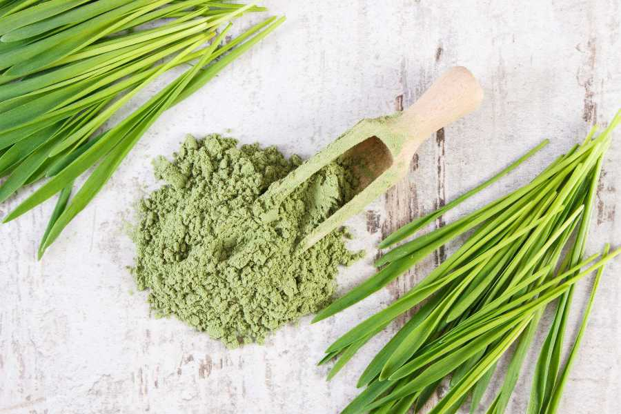 Frequently Asked Questions About Barley Grass Powder