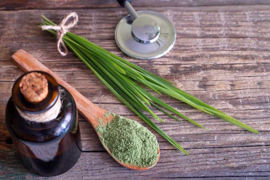 The Health Benefits of Barley Grass