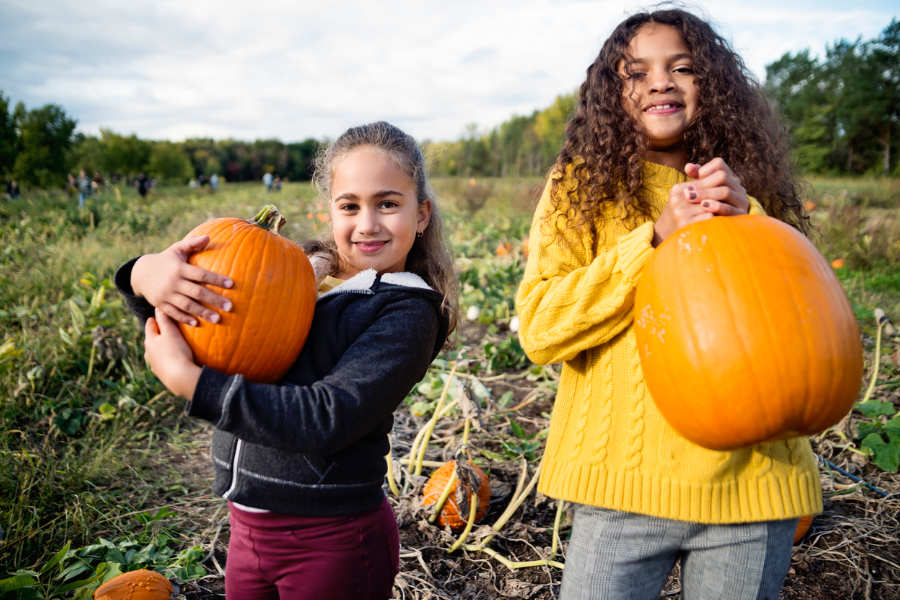 Pumpkin Seeds Fight Cancer Cells