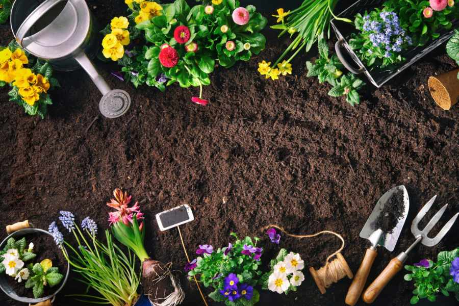 Gardening Ideas - The Giving Nature